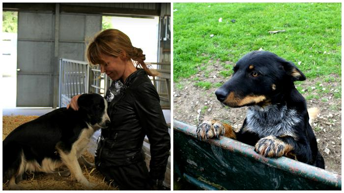 Mia fra KomPress - hun var ret glad for hunde...